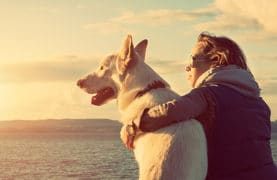 Dog ownership increases activity