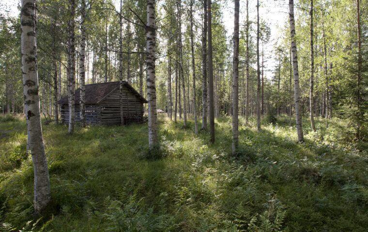 forest-north-karelia