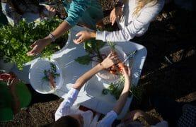 school-gardens