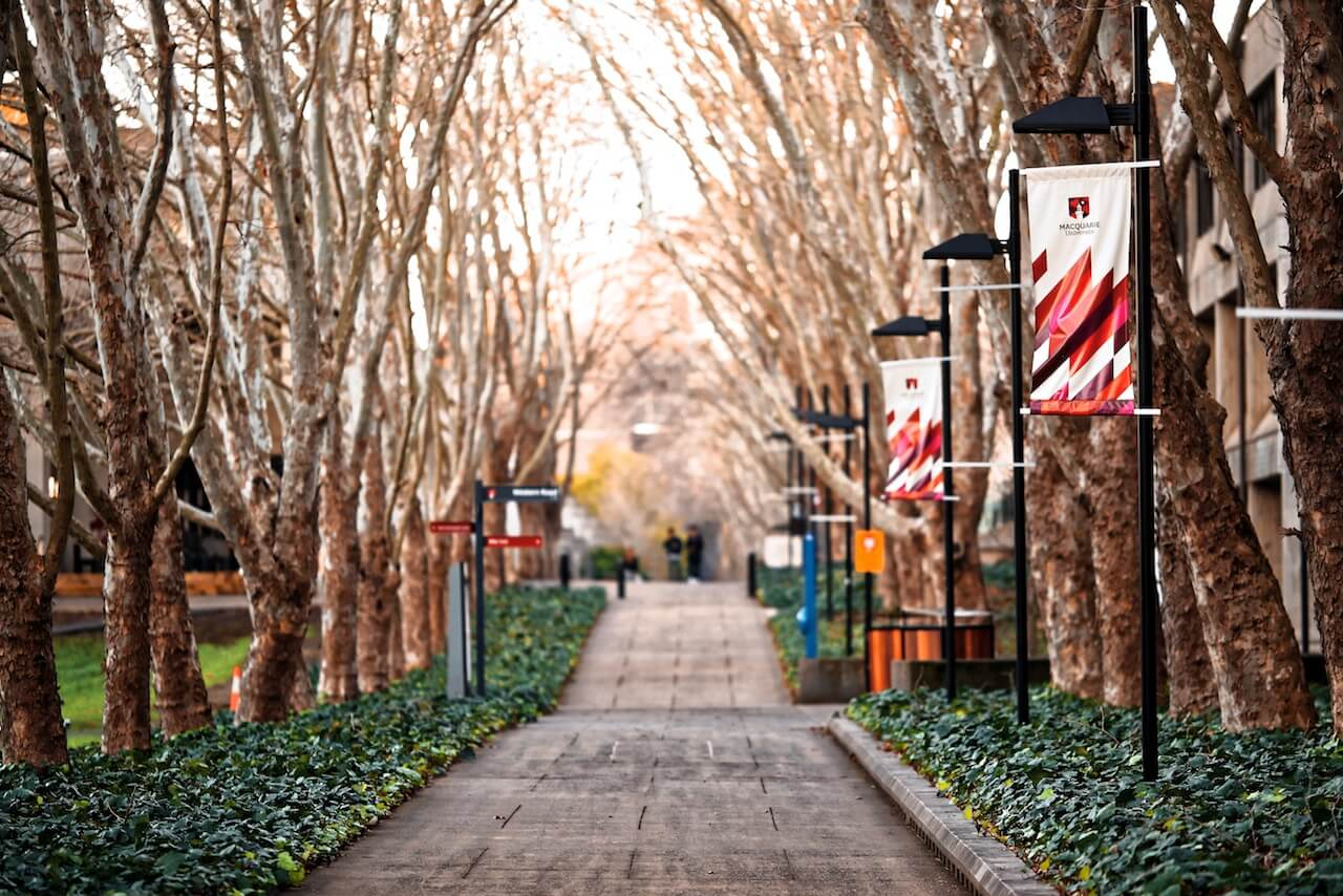 trees-street