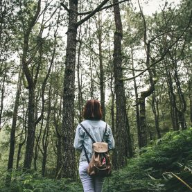 forest-bathing-woods