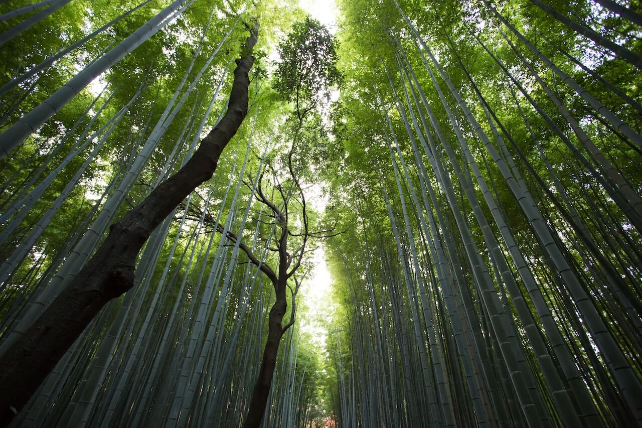 japan-forest-bathing