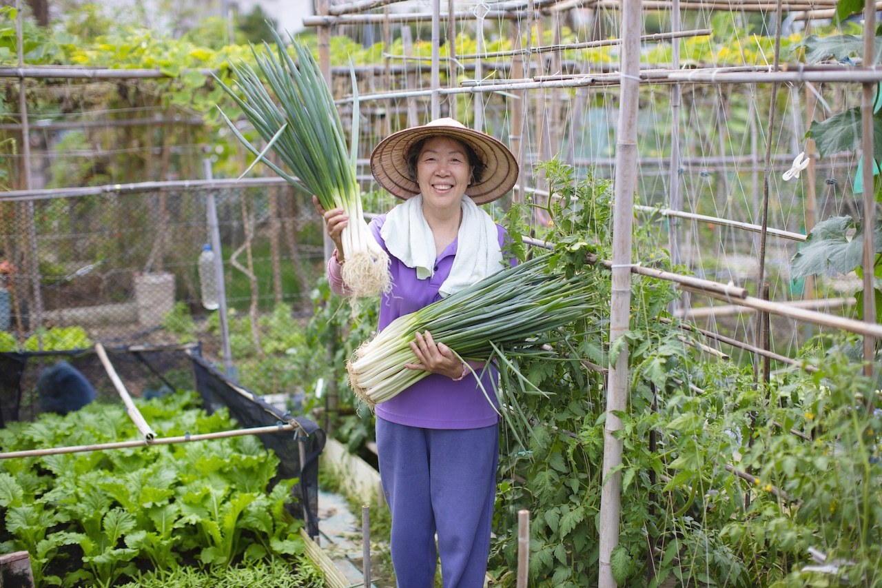gardening-for-beginners