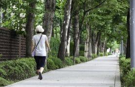 A woman walks along a sidewalk lined with trees in Seoul, Korea.