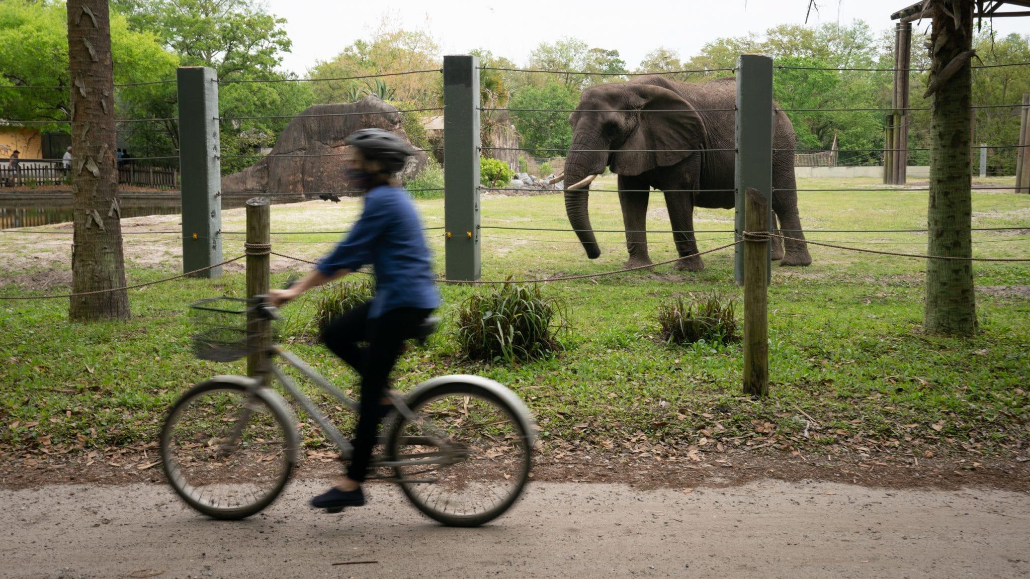 Paula Shields rides her bike through The Jacksonville Zoo.